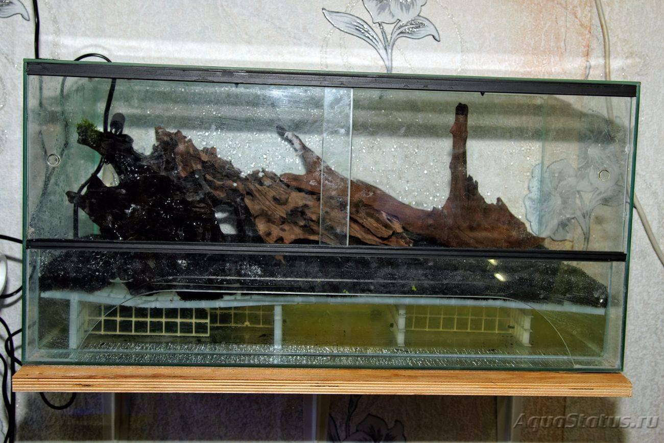 Террариум для черепах - как обустроить дом для сухопутной и водоплавающей черепахи?