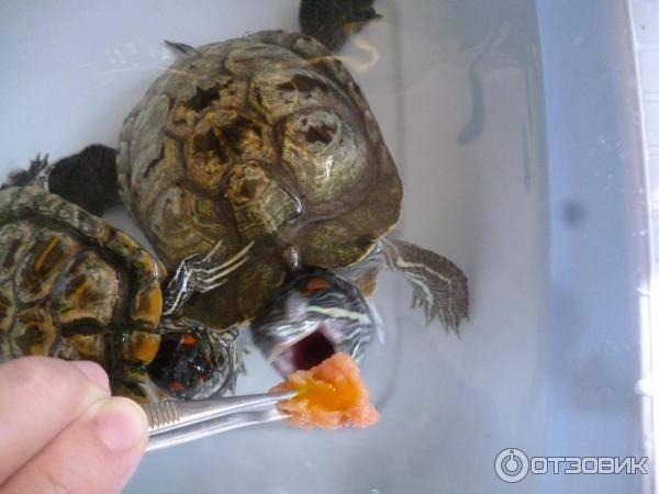 Витамины для красноухих черепах