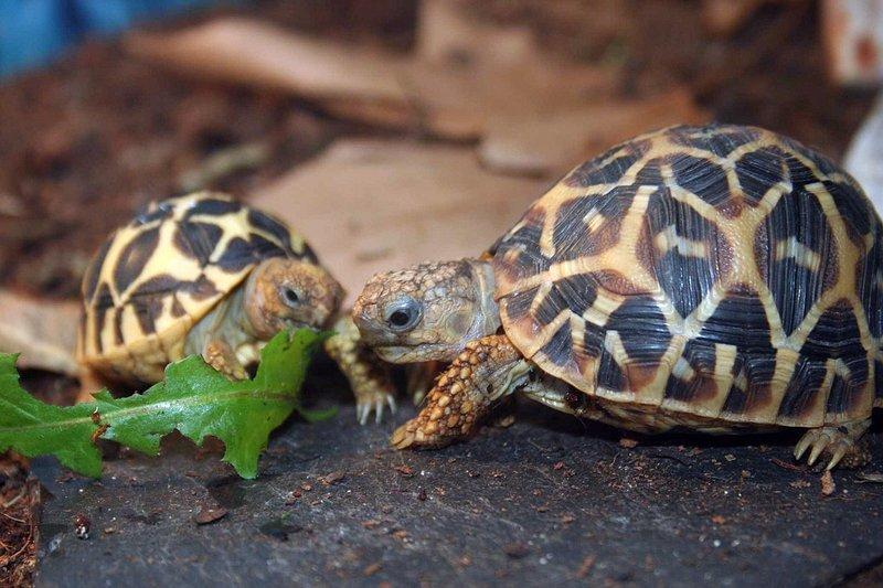 Аквариумные черепашки - основные нюансы выбора и содержания