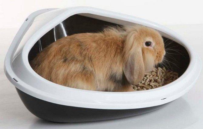 Советы как приучить декоративного кролика к лотку
