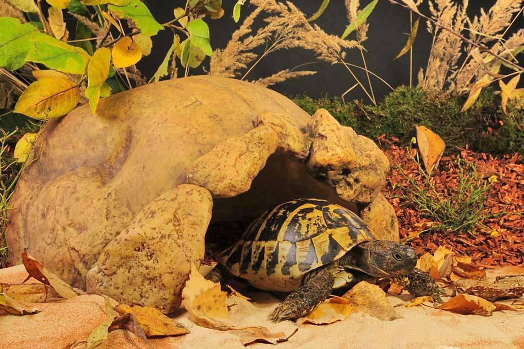 Как ухаживать за сухопутной черепахой - правила и важные нюансы содержания