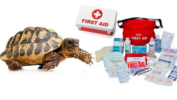 Ветеринарная аптечка. какие лекарства нужно иметь дома?