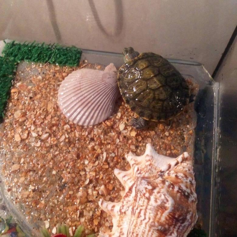 Чем кормить черепаху: правильное питание и многообразие продуктов