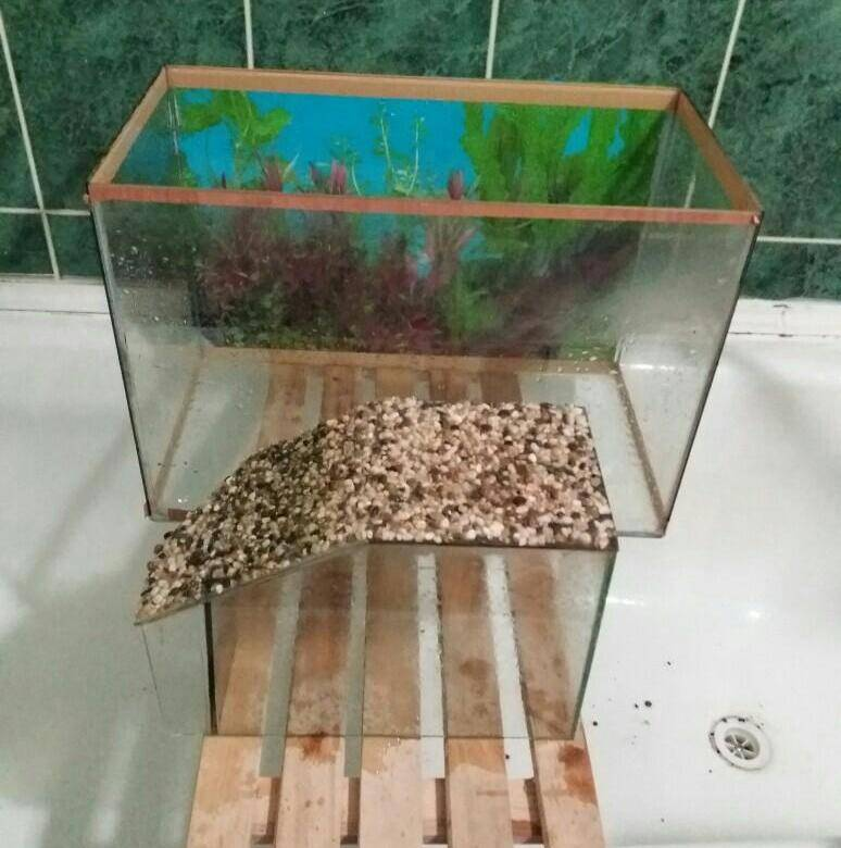 Какой аквариум нужен для красноухой черепахи?