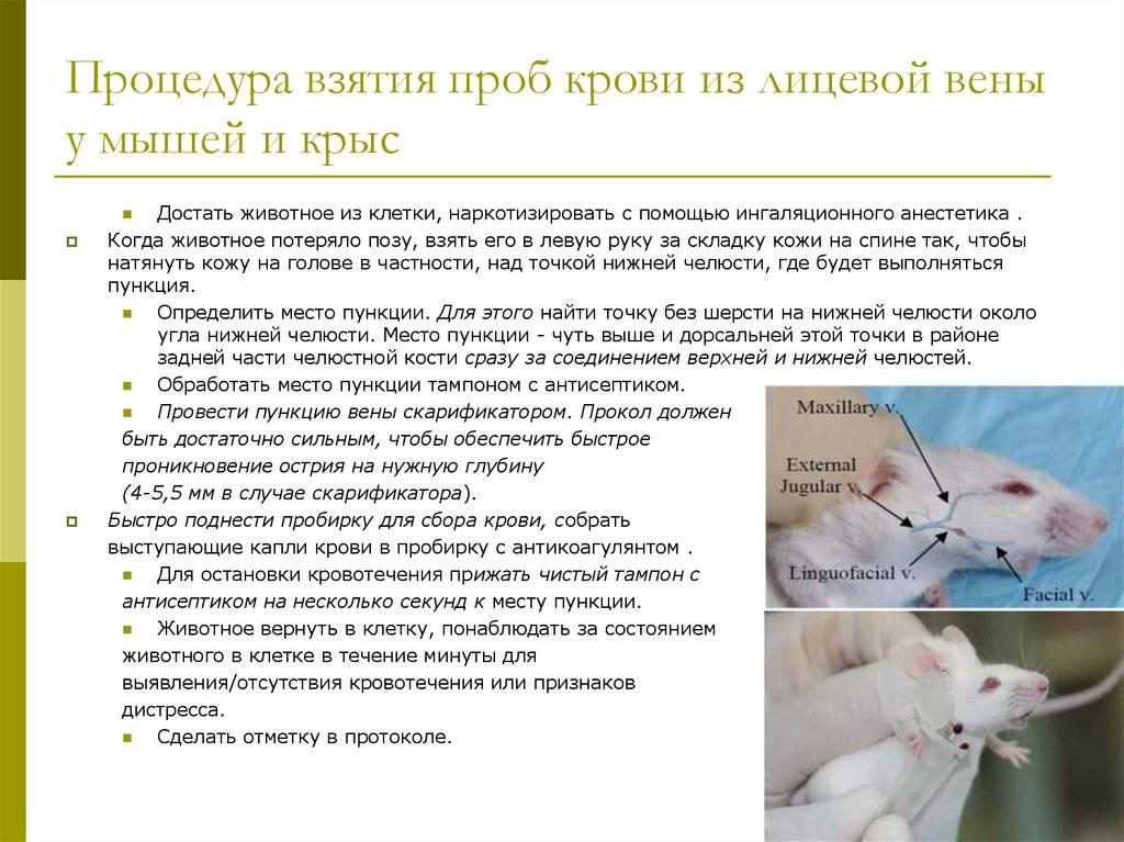 Тесты нмо/диагностика, лечение, профилактика новой коронавирусной инфекции (covid-19) в первичной медико-санитарной помощи на дому