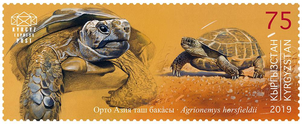 Среднеазиатская черепаха (agrionemys