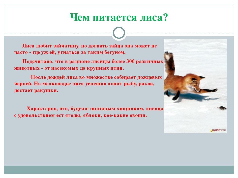 Лисица обыкновенная: описание, образ жизни