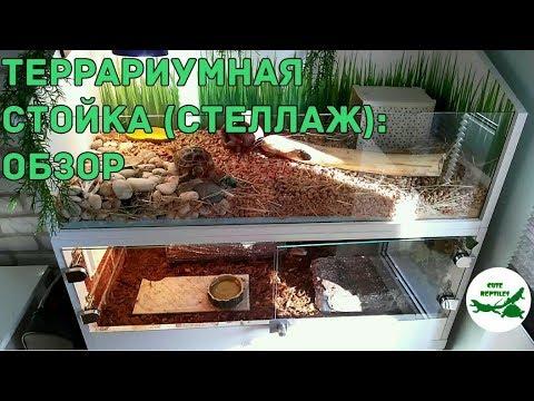 Выращивание корма для террариумных животных