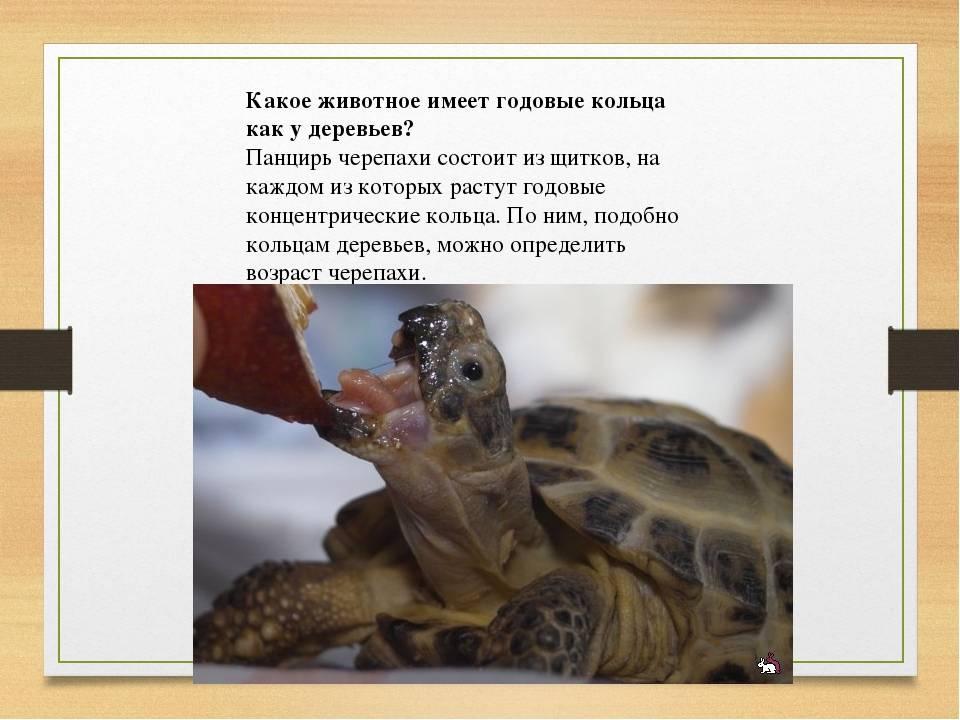 Как узнать сколько лет сухопутной черепахе