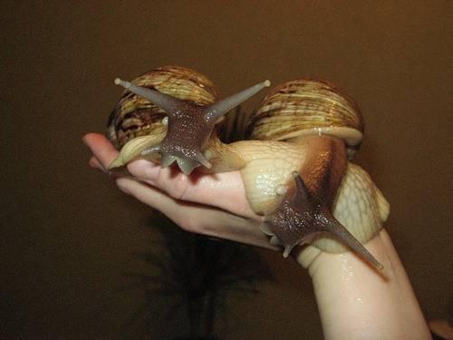 Чем кормить???? черепах красноухих?? - чем кормить водную черепаху - стр. 1 - запись пользователя kisa (medved12) в сообществе домашние животные в категории улитки, черепахи, рептилии - babyblog.ru