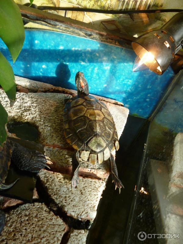 Какая ультрафиолетовая лампа лучше для красноухой черепахи
