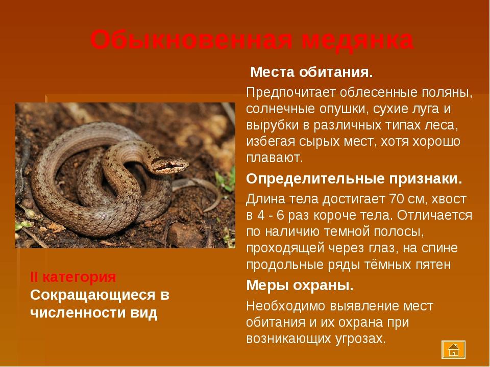 Змея медянка обыкновенная, фото и описание вида
