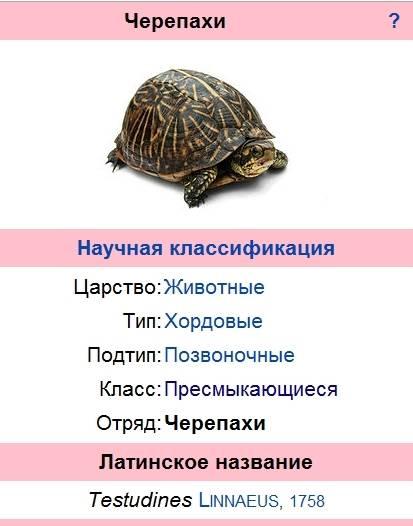 Черепахи — циклопедия