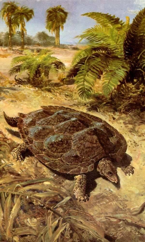 Откуда появились черепахи и где находится их родина?