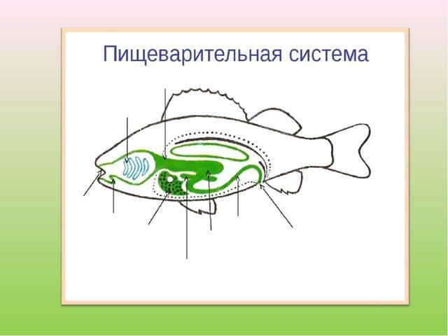 Как устроена черепаха внутри: фото