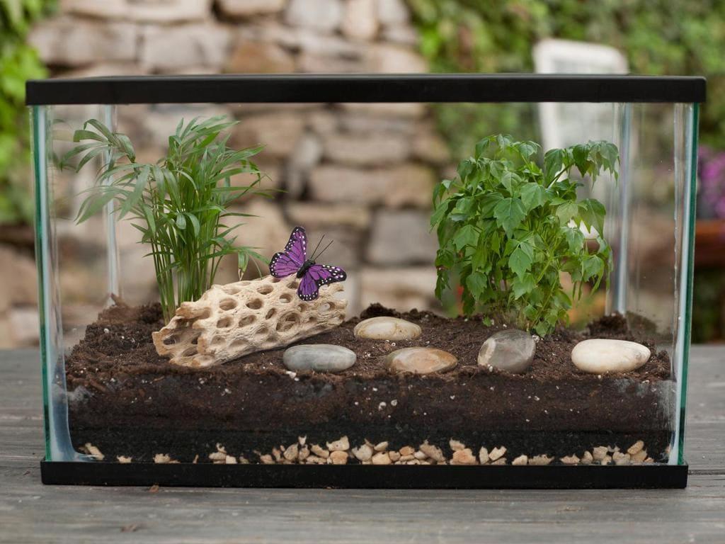 Оформление террариума - вода, влажность, грунт, коряги, растения