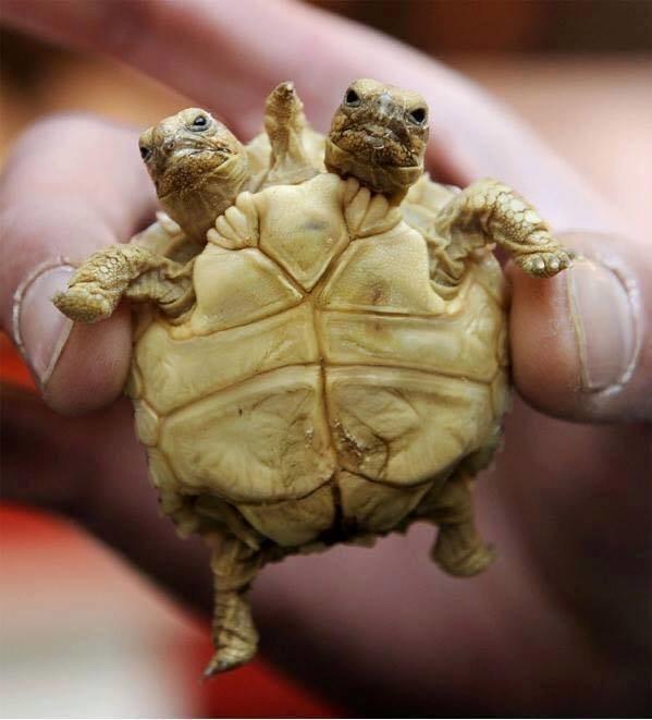 Что делать если черепашка не ест. черепаха ничего не ест. причины и последствия