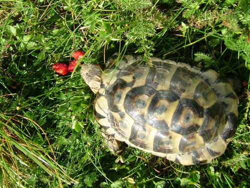 В бразилии потеряли черепаху и нашли ее через 30 лет в чулане | служба новостей спр