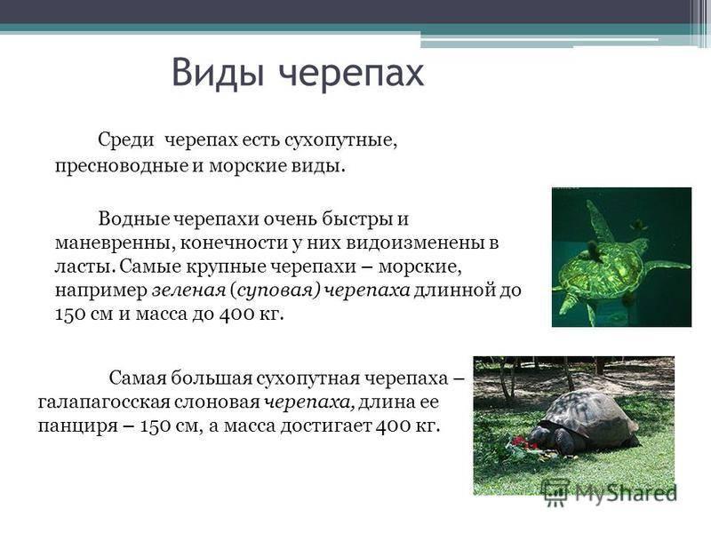 Binarn.ru.стратегия торговли черепаха для бинарных опционов - суть и принцип использования