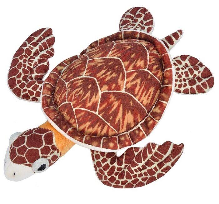 Homopus signatus (капская крапчатая плоская черепаха)