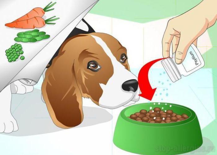 Собаки защищают детей от аллергии и ожирения