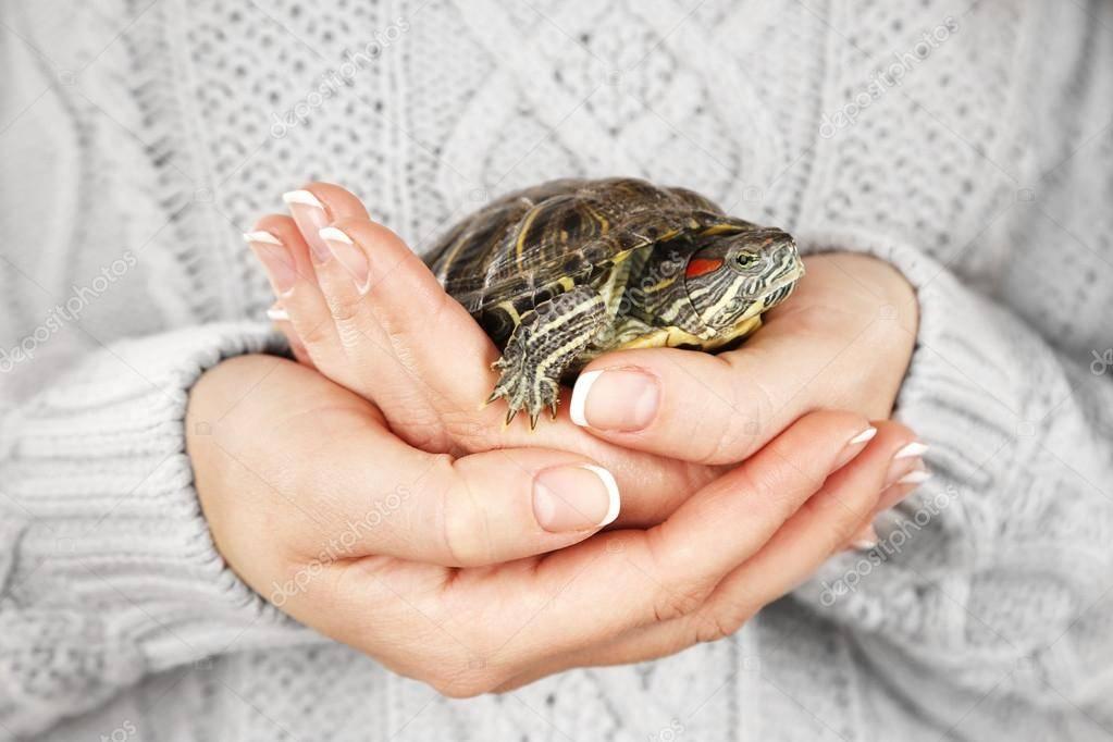 На сухопутную черепаху есть аллергия