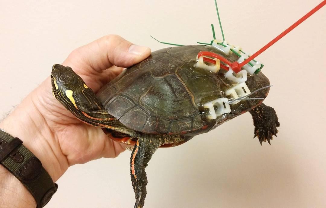 Черепахи - и нет им конца