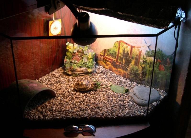 Террариум для сухопутной (среднеазиатской) черепахи
