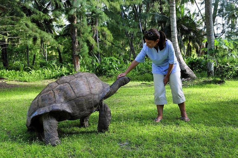 Сейшельская гигантская черепаха: фото, описание, характеристики и интересные факты