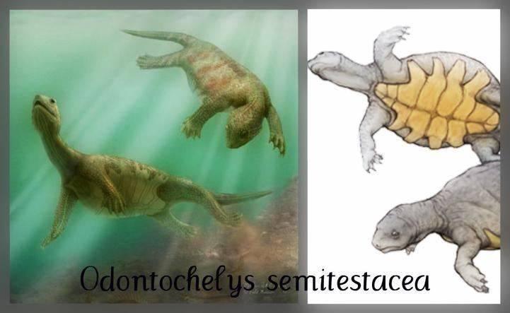 Odontochelys