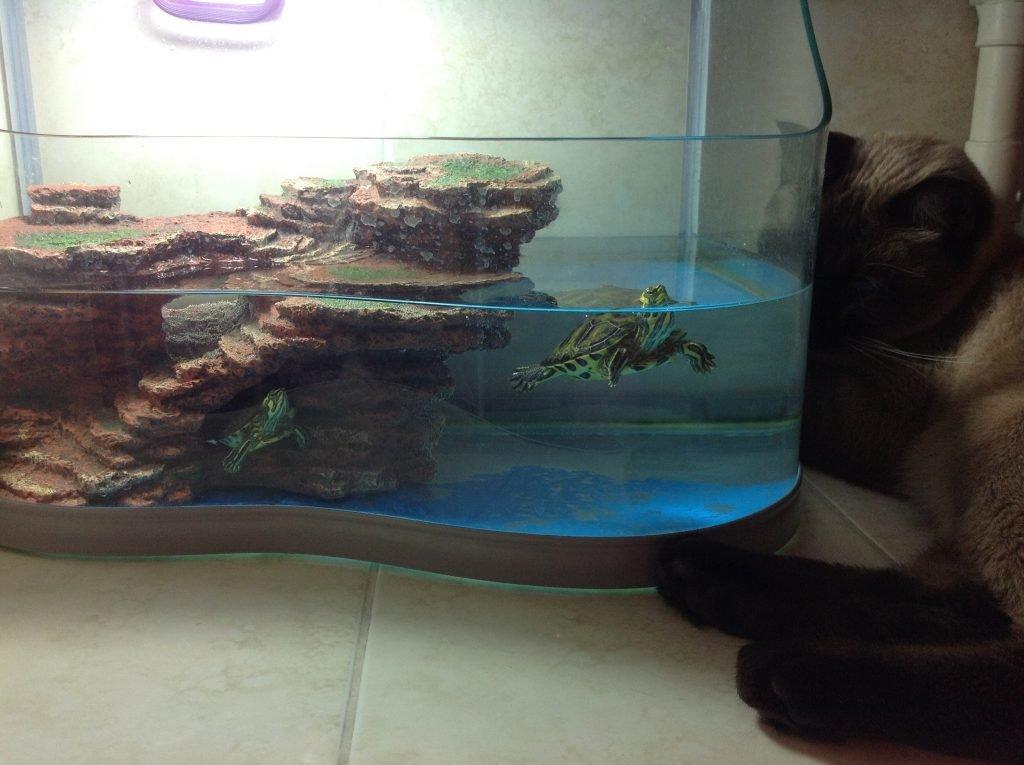 Террариум для черепах - как правильно обустроить и оборудовать?