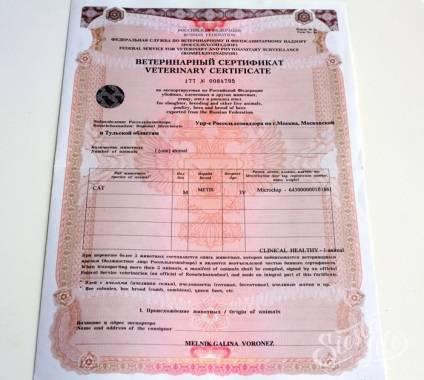 Регистрация экспортных грузов в журнале аргус.пвкп — справочная система россельхознадзора