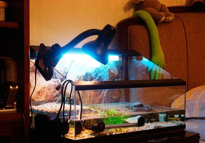 Всё про акватеррариумы для красноухой черепахи