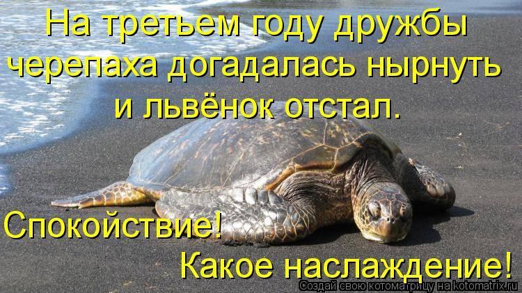 Добрые анекдоты про черепах