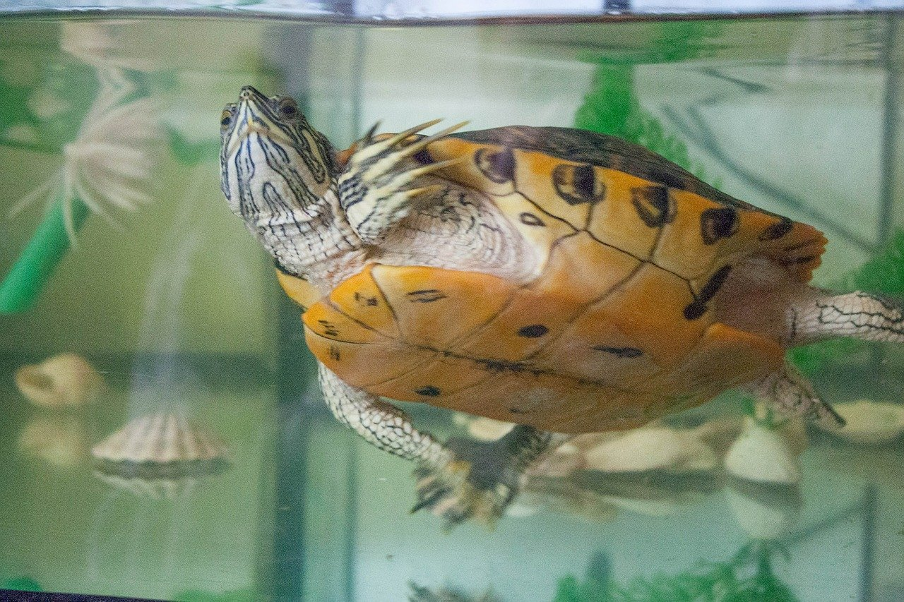 Вода для красноухой черепахи