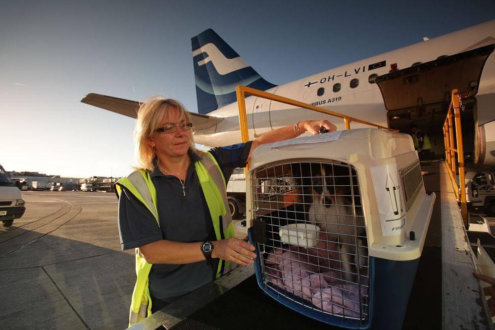 Как перевезти собаку в самолете, поезде: все об отдыхе с питомцами. как приучить собаку к переноске