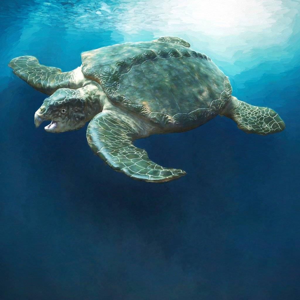 Черепахи древности и современности – список, описание, интересные факты, фото и видео