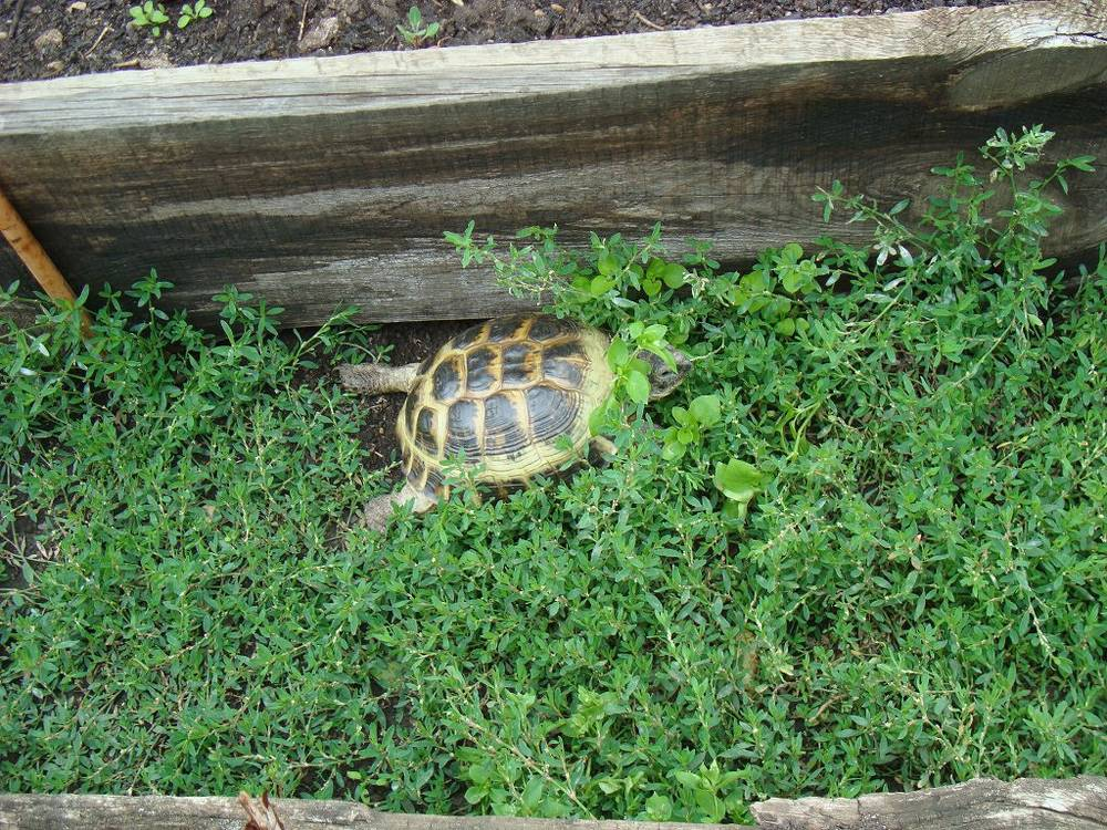 Как найти черепаху