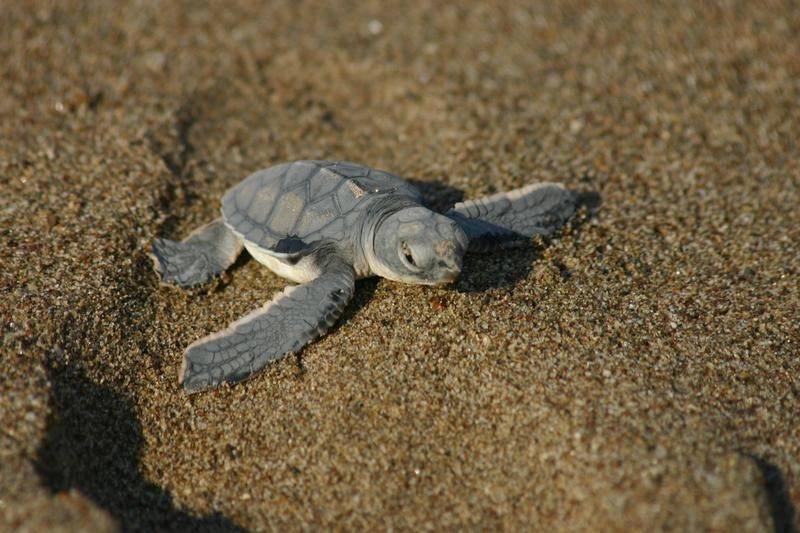 Черепаший пляж парамали, кипр. отзывы, фото, видео, отели рядом, как добраться — туристер.ру
