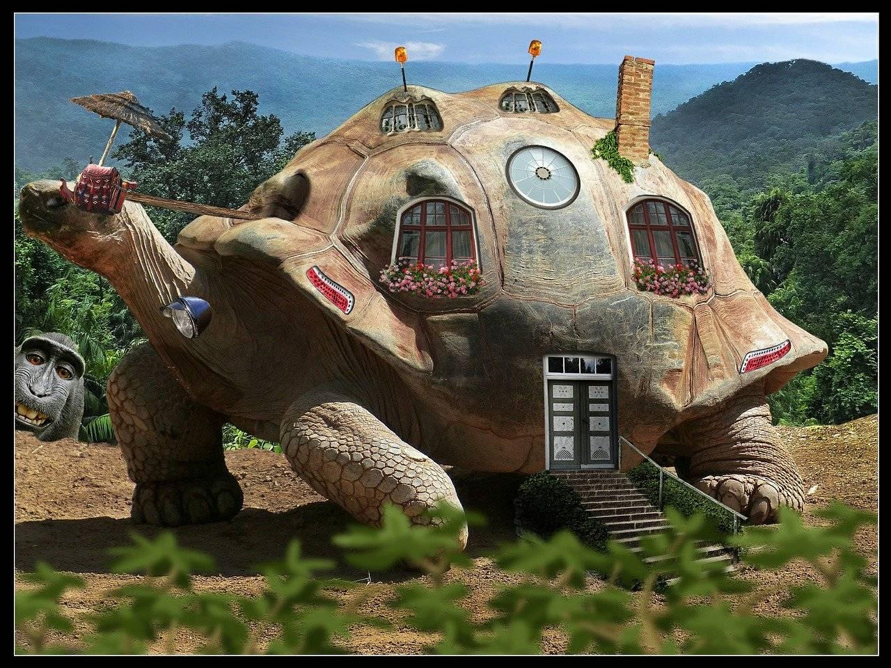 Приметы про черепах в доме