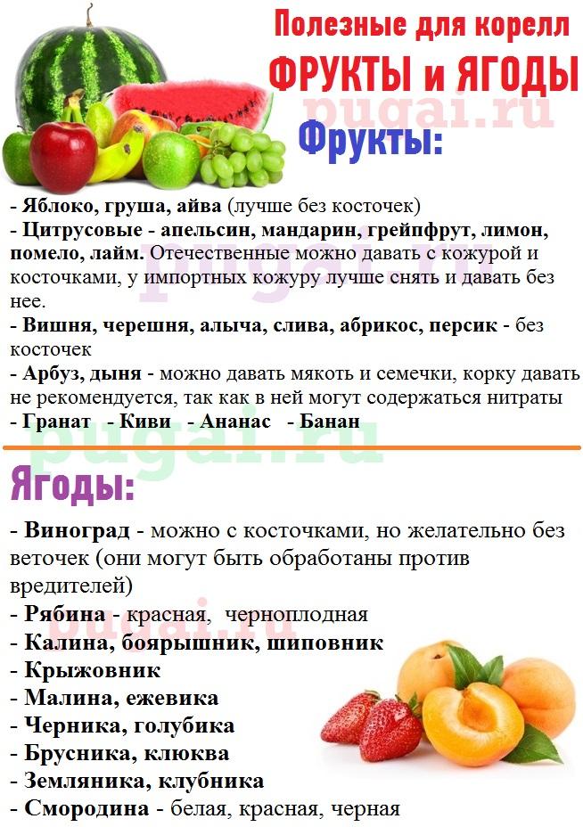 Можно ли волнистым попугаям яблоки, бананы и что из фруктов давать
