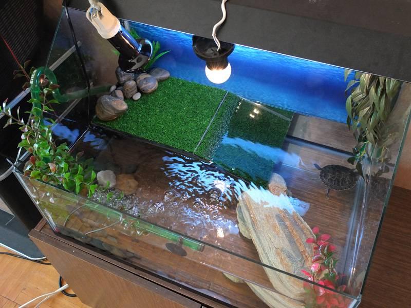 Как обустроить аквариум для красноухой черепахи — обобщенный взгляд