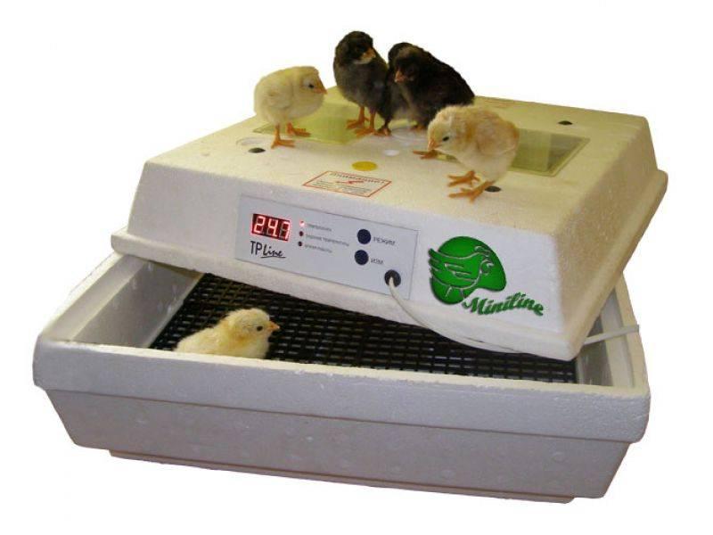 Инкубация яиц. клуб любителей пятнистых эублефаров