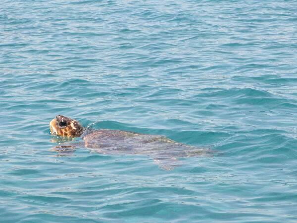 5 мест, где можно поплавать с черепахами