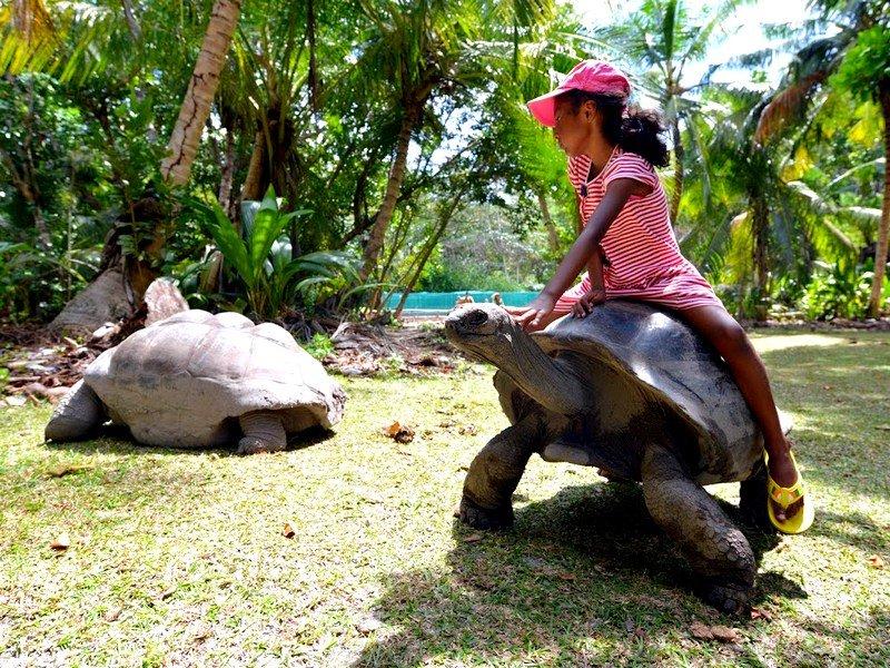 Сейшельские острова - seychelles
