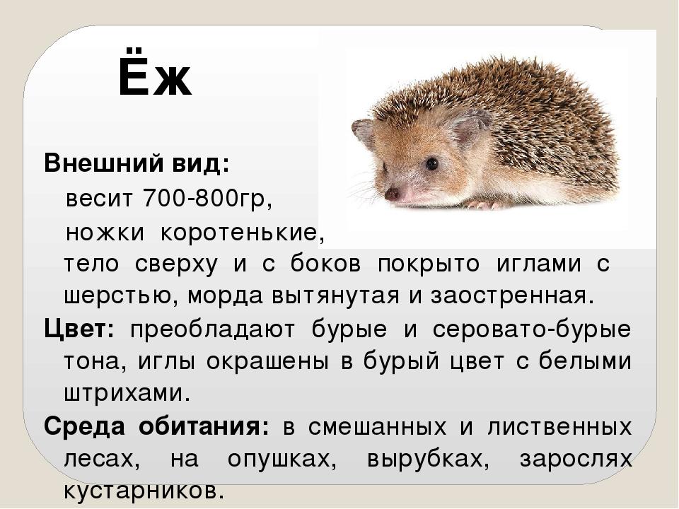 Ежи: места обитания, виды, особенности, образ жизни