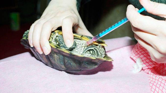 Сколько и как часто кормить красноухих черепах?