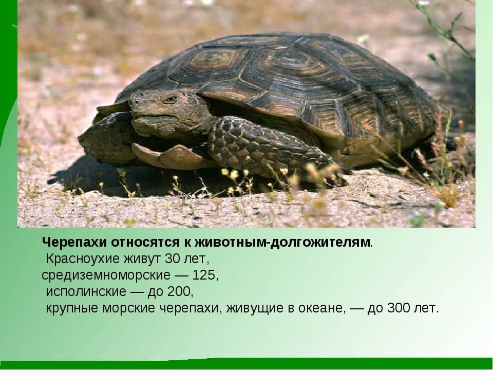Сухопутные черепахи — википедия с видео // wiki 2