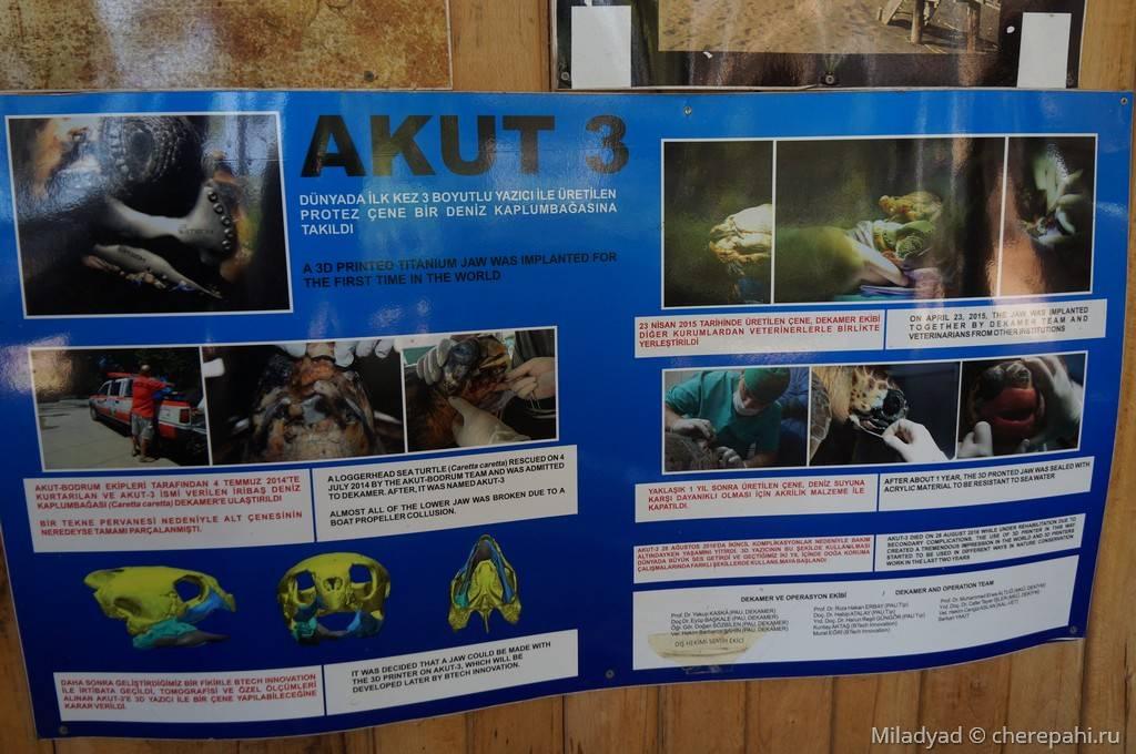 Главная страница сайта - черепахи.ру - все о черепахах и для черепах