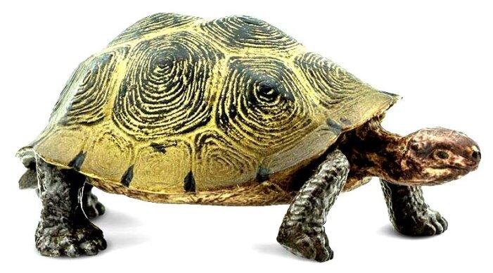 Graptemys pseudogeographica (псевдогеографическая черепаха) - черепахи.ру - все о черепахах и для черепах